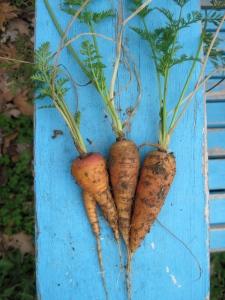 2014-03-01 carrots